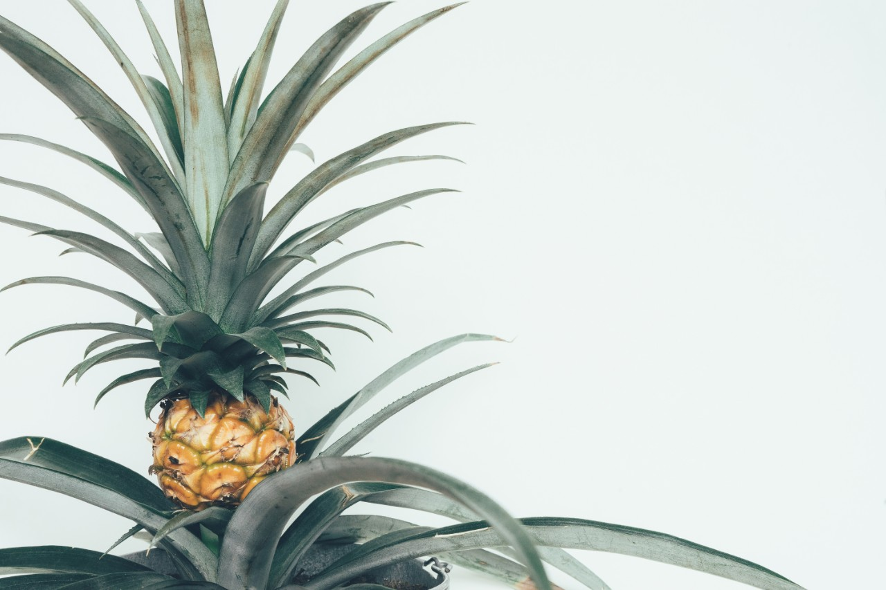 Pineapple Plant Image